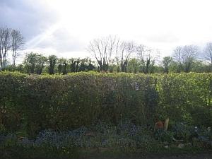 Gardening services South Warwickshire